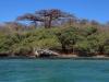 baobab-mer-madagascar-jpg