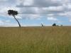 kenya-dans-la-reserve-du-massai-mara-les-animaux-souffrent-des-secheresses-recurrentes