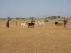 kenya-le-troupeau-seule-richesse-du-peuple-turkana