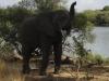 elephants-zambeze-morad-ait-habbouche-2012